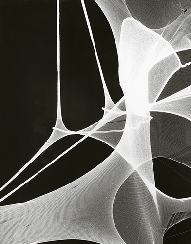 Photogram series | 2012